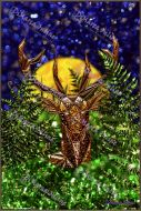Postcards 14 - Deer Todj - Digital Download